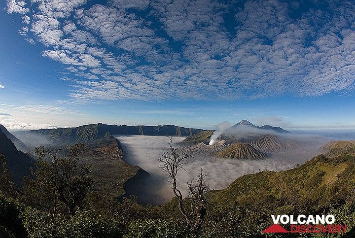 The Tengger caldera in the morning (Photo: Tom Pfeiffer)