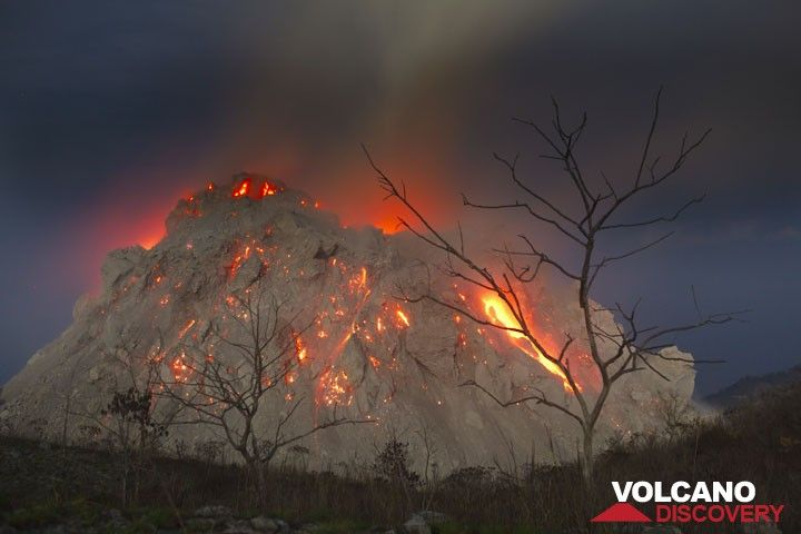 Naked trees silhouetted against the active lava dome of Paluweh volcano (Flores Sea, Indonesia) on 1 Dec 2012. (Photo: Tom Pfeiffer)